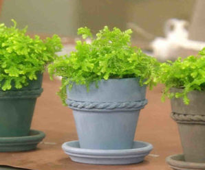 How to paint terracotta pots?