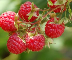 How to know the Benefits of Raspberry paper?