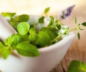 How to Treat cough with medicinal herbs?