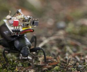 A tiny camera to spy on the insect world